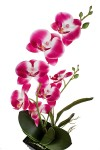 Композиция декоративная Пылкая орхидея