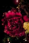 Цветок декоративный Изысканный пион