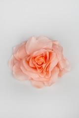 Брошь Нежная роза